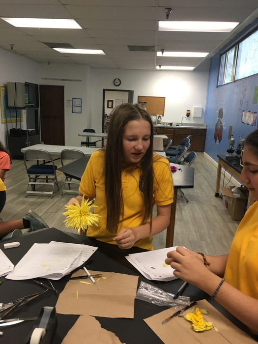 "7th graders performing a flower ""dissection."""