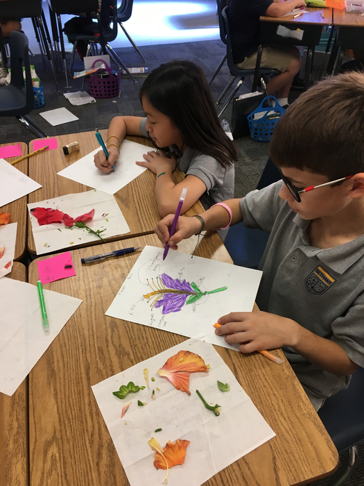 Dissecting and sketching flowers