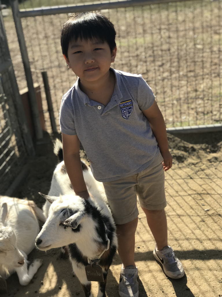 Kindergarten went on their second field trip to Amy's Farm! They pet cows, horses, and goats!  #bethanylions #fieldtrips #explorationlearning