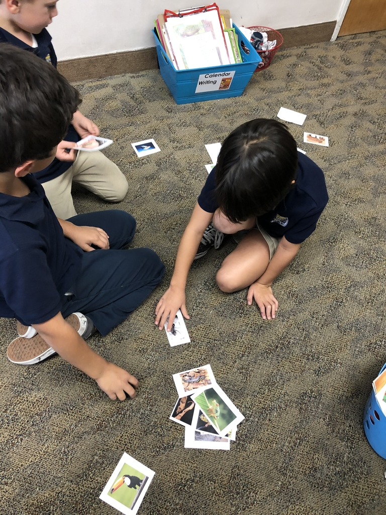 First grade learning how to classify animals into groups. #bcslions