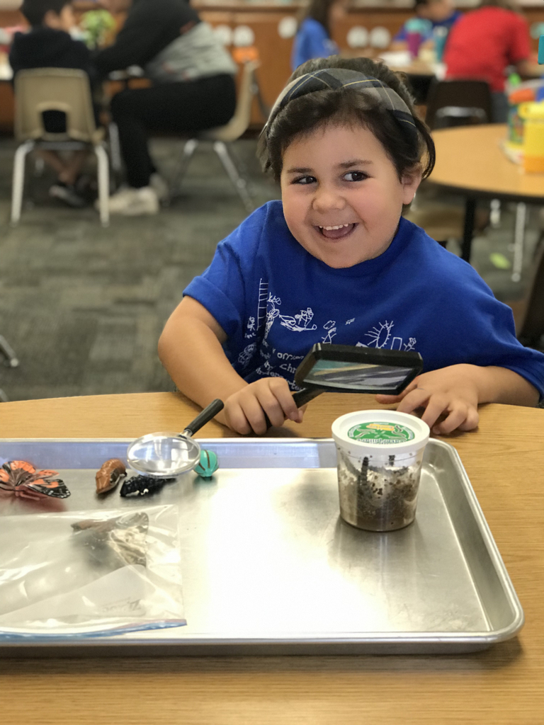 The kindergarteners learned about the butterfly life cycle this week! They were able to use a magnifying glass to look at our caterpillars growing, preserved butterflies, and models of each stage of the life cycle. We also took time to pray and thank God for creating butterflies. They are little scientists! #bcslions